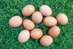 Eggs in the green grass Royalty Free Stock Photo