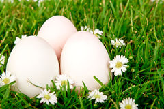 Eggs on green grass with flower. Royalty Free Stock Images