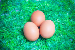 Eggs on the green grass. Fresh eggs on the green grass Stock Images