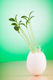 Eggs with green seedling Stock Photo