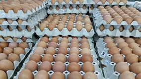 Eggs group background royalty free stock photo