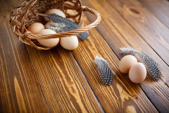Eggs of a guinea fowl. Guinea fowl eggs and feathers on a wooden table Stock Image