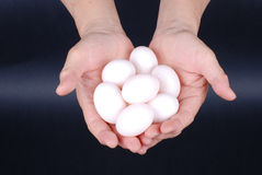 Eggs in hand Stock Image