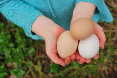 Eggs in Hands of a Child. Three organic eggs held by a child Royalty Free Stock Photos