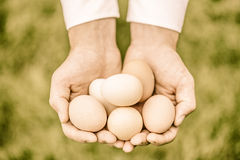 Eggs in Hands Royalty Free Stock Photo