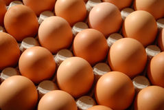 Eggs before hatchery Royalty Free Stock Photography