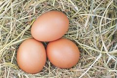 Eggs in hay Royalty Free Stock Image