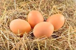 Eggs in hay Stock Photo