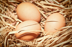 Eggs at hay nest Stock Images