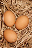 Eggs at hay nest Royalty Free Stock Photos