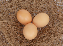 Eggs on hay nest backgorund. Three eggs on hay nest background Royalty Free Stock Images