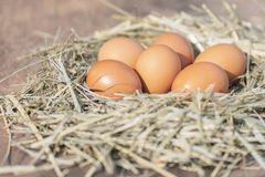 6 eggs in hay nest. Close up eggs in hay nest on wood with high resolution files stock images