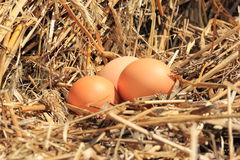 Eggs in the hay. Eggs in the nest of straw Royalty Free Stock Photography