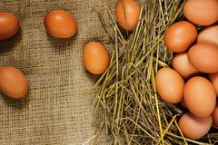 Eggs in the hay on sacking. stock image