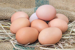 Eggs in hay straw nest Stock Image