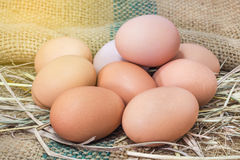 Eggs on hay straw nest Royalty Free Stock Photography
