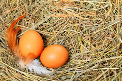 Eggs on the hay Royalty Free Stock Photos