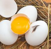 Eggs in a heap Stock Images