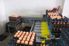 Eggs from hen farm in package and old weight scales machine for Royalty Free Stock Image