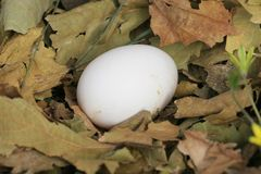 Eggs Hintergrund Stockfotografie