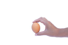 Eggs. Hold the egg in hand White background Royalty Free Stock Photos
