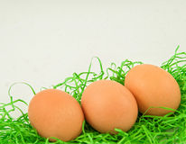 Eggs hunt in the green grass with the white background Stock Images