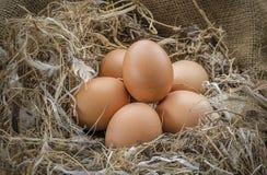 Eggs il pollo in un'azienda agricola Fotografie Stock Libere da Diritti