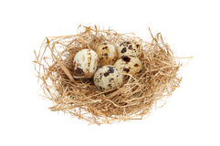 Free Eggs In A Nest Stock Image - 39817391