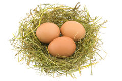 Eggs in a jack Royalty Free Stock Photos