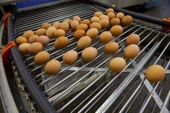 Eggs la cadena de producción imágenes de archivo libres de regalías