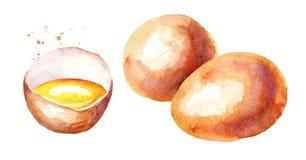 Eggs la composition Illustration tirée par la main d'aquarelle d'isolement sur le fond blanc illustration stock
