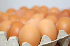 Eggs la linea di produzione Immagini Stock