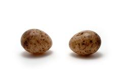 eggs la mésange grande de s Images libres de droits