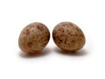 eggs la mésange grande de s Photographie stock libre de droits