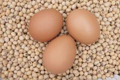 Eggs la soia Immagini Stock