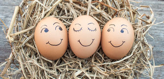 Eggs laid on straw Stock Image