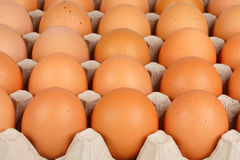 Eggs in the lattice. Brown eggs in the lattice package Stock Image