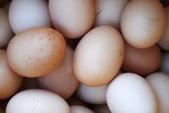 Eggs le fond Image stock