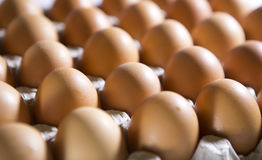 Eggs lie in  cardboard support Royalty Free Stock Photos