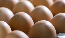Eggs lie in  cardboard support Stock Photography