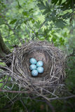 The eggs lie in a nest on a tree. Stock Photo