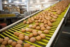 Eggs a linha de produção Fotos de Stock Royalty Free