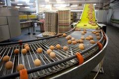 Eggs a linha de produção Foto de Stock