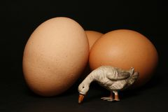 Eggs and little goose Stock Photos