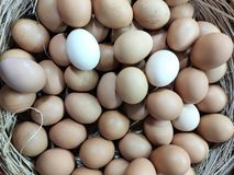 Eggs, a lot of eggs lie in braided wooden from rods basket, light brown eggs and white eggs. Eggs lot lie braided wooden rods basket light brown white royalty free stock image