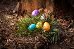 Eggs lying at forest on stump Stock Photo