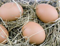 Eggs lying on hay Royalty Free Stock Photography