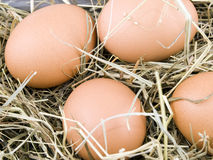 Eggs lying on hay Stock Image