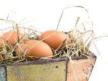 Eggs lying on hay in flowerpot Stock Photography