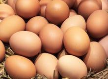 Eggs Many eggs Stock Photo
